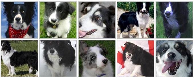 Public Datasets for Machine Learning: Dog Breed Identification Dataset
